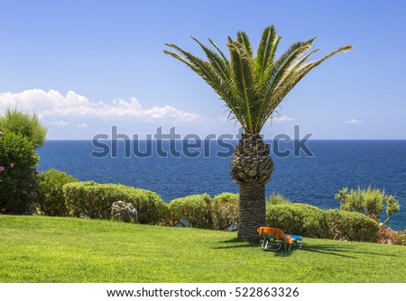 Deck chair on the lawn under the palm trees