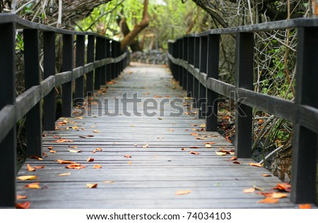 Decked walk through the mangroves - stock photo