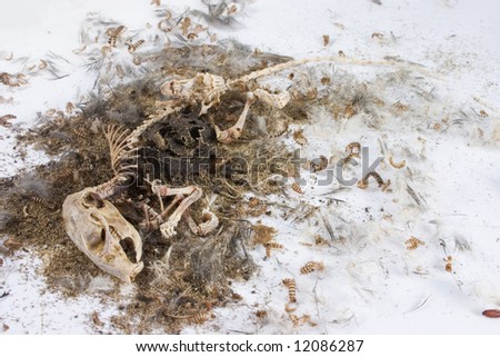 decomposed mouse with skeleton structure and loose hair surrounded by worms and maggots