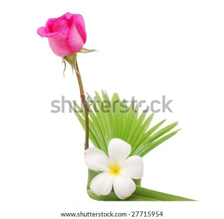 decor a rose and frangipani vase - stock photo