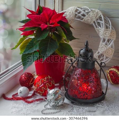 Decor winter window on the eve of Advent with Christmas star  (Euphorbia pulcherrima) - stock photo