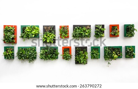 Decorate in the garden,Plants in the frame. - stock photo