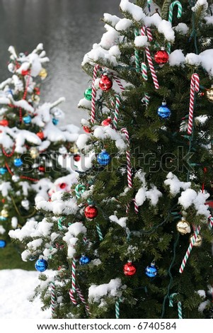 decorated christmas trees outside - stock photo