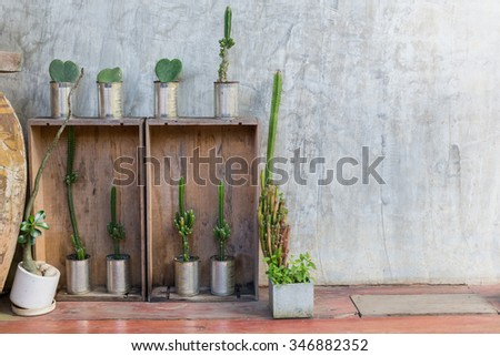 Decorated plants on concrete wall in old house - stock photo