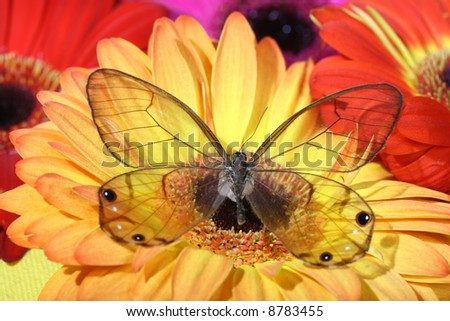 decoration butterfly - stock photo
