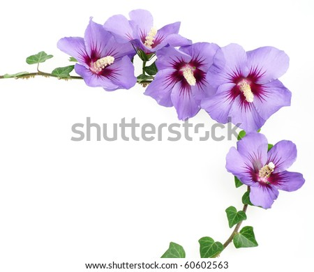 decoration from hibiscus flowers - stock photo