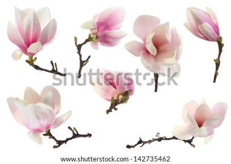 decoration of few magnolia flowers - stock photo