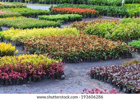 Decoration plant in nursery - stock photo