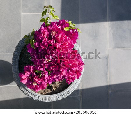Decorative aegean and mediterranean flower begonia in a vase - stock photo