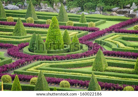 Ornamental plants stock photos images pictures for Design of ornamental plants