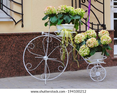 Decorative bicycle with potted hortensia flowers