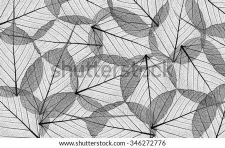 Decorative black skeleton leaves background - stock photo