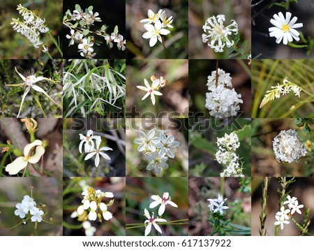 Decorative collage design rare white pastel stock photo edit now decorative collage design of rare white and pastel wild flowers spider orchid curry plant mightylinksfo