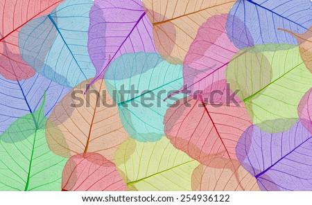 Decorative colorful skeleton leaves background - stock photo