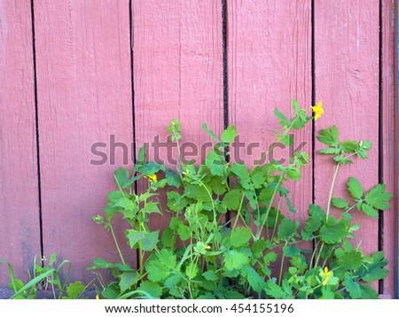 Decorative fern near the house. Landscaping. Decoration plants suburban yard. Caring for plants. Gardening. - stock photo