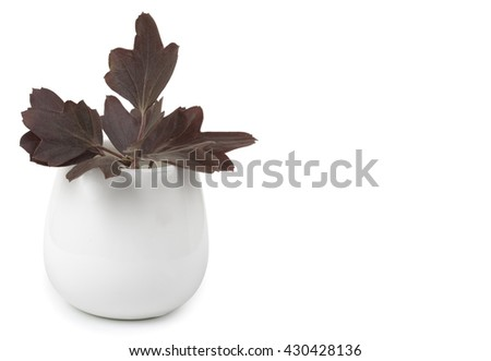 Decorative flower garden in a ceramic vase, flowerpot. Isolated on white background, close-up and blank place for your text. - stock photo