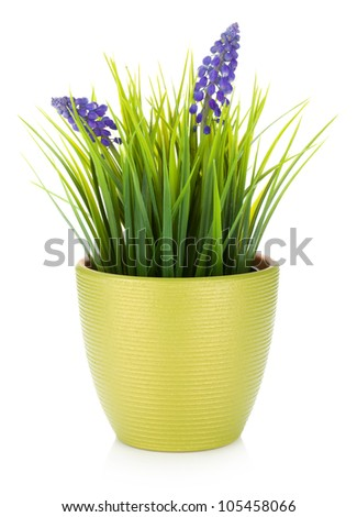 Decorative flower in flowerpot. Isolated on white background - stock photo