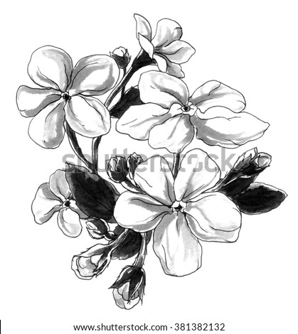 Decorative Forget Me Not Spring Flowers In Bouquet Botanical Hand Drawn Watercolor Black And White