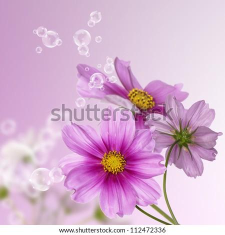 Decorative garden flowers - stock photo