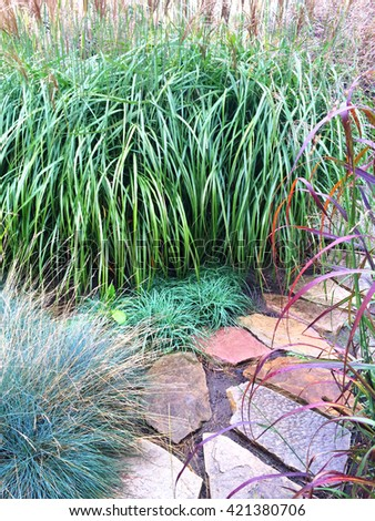 Decorative grass and stone path in the summer garden.