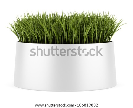 decorative grass in pot isolated on white background