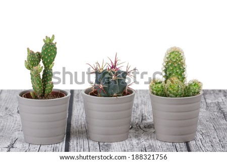 Decorative Indoor Cacti on a White Background - stock photo