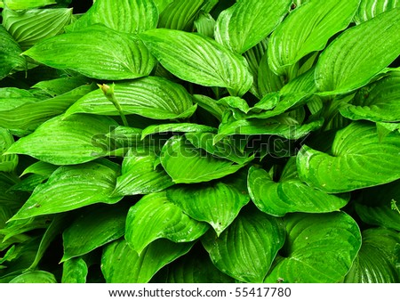 Decorative leaves as a part of garden design - stock photo