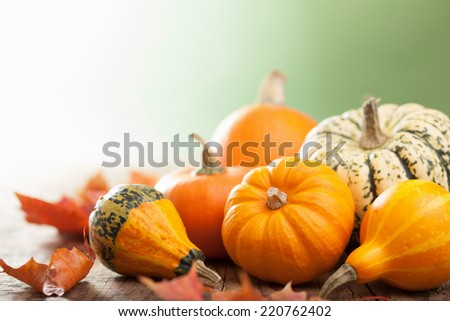 decorative mini pumpkins on wooden background  - stock photo
