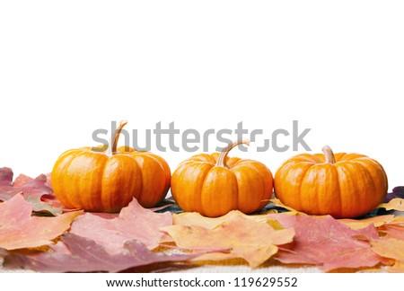 Decorative miniature pumpkins - stock photo