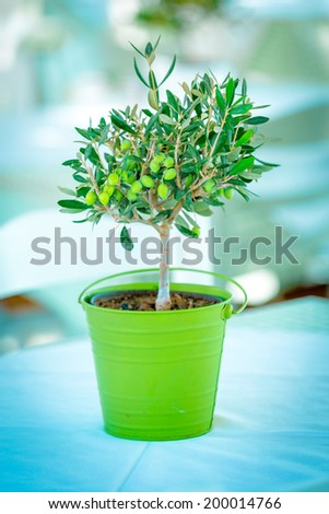 decorative olive tree in a flowerpot - stock photo