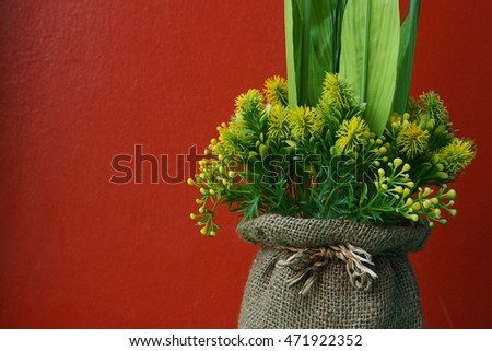Decorative plant and red wall