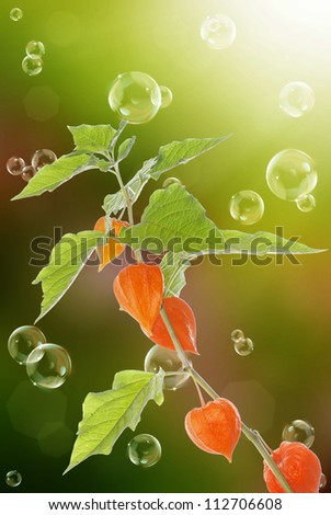 Decorative plant over blurred dark beautiful background