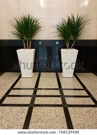 Decorative Plants In A Big Pots At A Lift Lobby Inside An Office Building