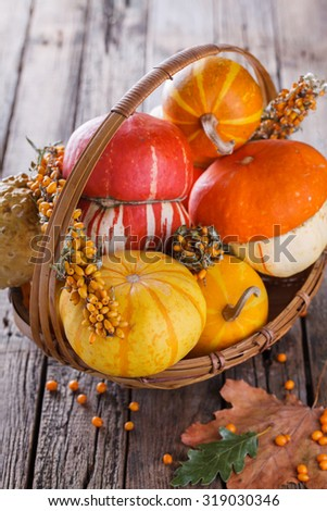 Decorative pumpkins. Autumn still life.selective focus - stock photo