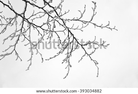 Decorative snow covered branch