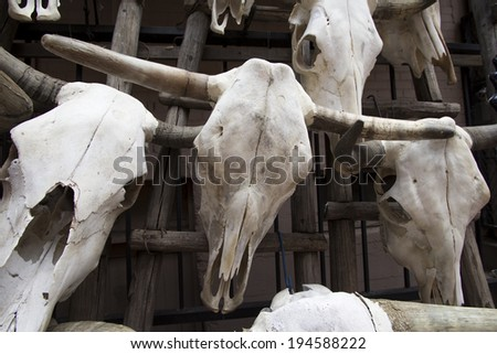 Decorative Steer Skulls for sale - stock photo