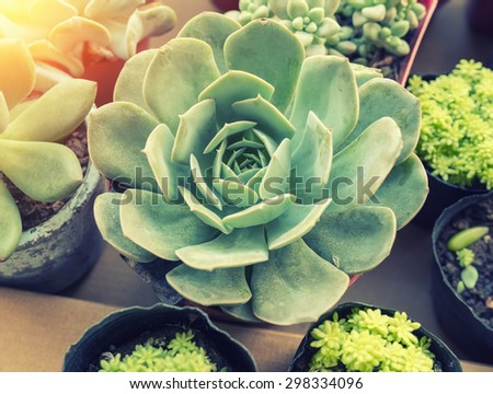 Decorative succulent plants - stock photo