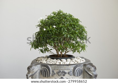 Decorative tree in vase - stock photo