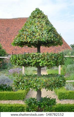 Decorative trimmed tree - stock photo