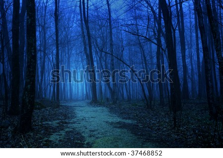 Deep blue foggy forest in spring - stock photo