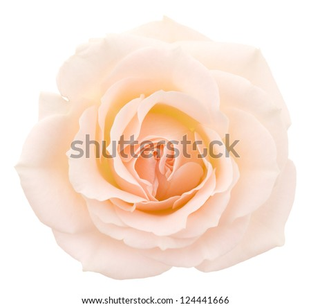 Deep focus. No dust. No pollen. More flower head in my portfolio. - stock photo