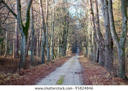 Deep forest and road