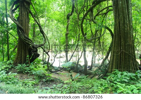 deep forest in Chiang Mai ,Thailand - stock photo