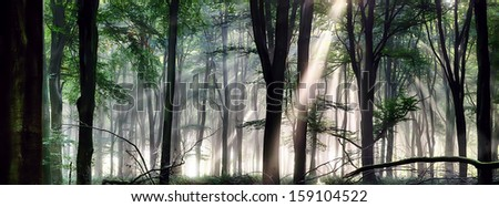 Deep forest landscape with misty morning sunlight - stock photo