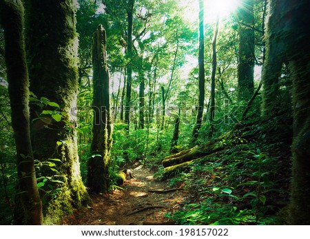 Deep green forest with mossy woods and ferns. Sunlight is shining through leaves and branches   - stock photo
