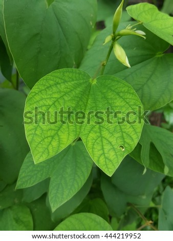 deep green pattern on the light green leaf