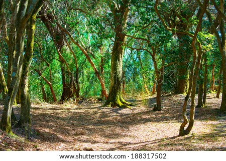 Deep in a old mossy green forest with sun rays coming down. Forest with a fantasy or fairytale touch.  - stock photo