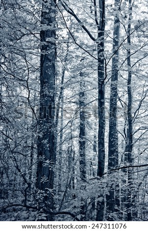 Deep in the forest. Peneda Geres National Park, north of Portugal. Infrared black and white toned blue.