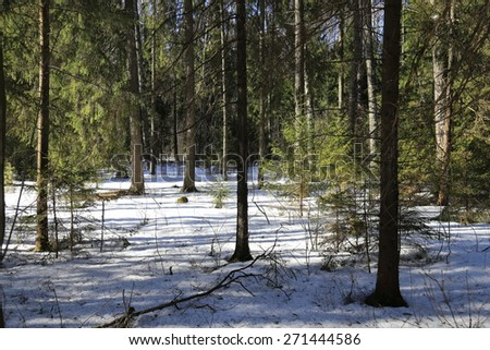 deep in the winter forest - stock photo