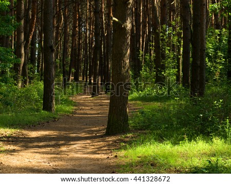 deep into the shadowed forest - stock photo
